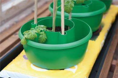 Plant Halos (Set of 3) Green Garden Plastic Watering Grow